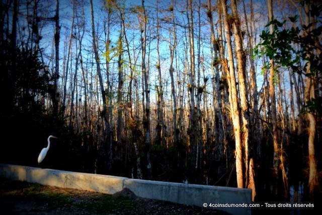 en prenant notre itinéraire bon plan Everglades vous verrez pleins d'animaux tous sauvage