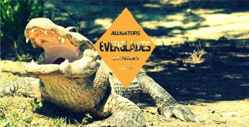 ou-aller-pour-voir-de-alligators-sauvages-everglades